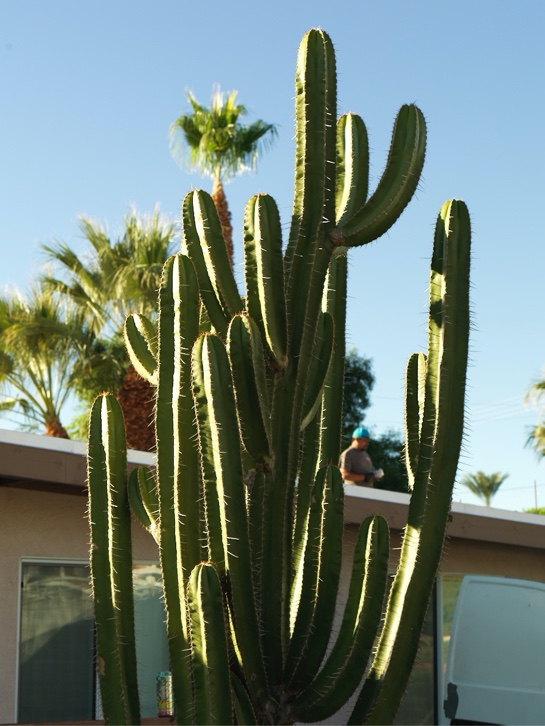 Menlook-Tribune-Palm Springs
